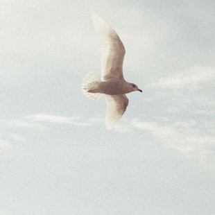 De ce doua pasari cu aripile frante nu pot zbura impreuna